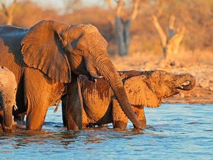 Deze 20-daagse safarireis door Zuidelijk Afrika boekt u bij Image Travel - christelijke reisorganisatie